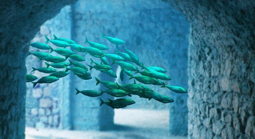 Mejores termómetros para acuarios